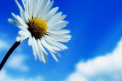 Apartment with 2 rooms - kitchen